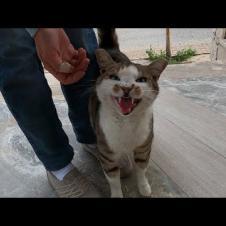 매우 큰 소리로 웃기는 뚱뚱한 고양이