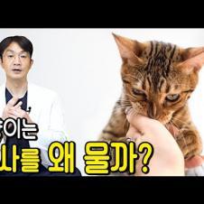 고양이가 집사를 물면 어떻게 해야 할까요? 고양이의 공격성의 다양한 원인과 해결방법.