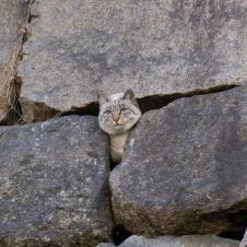 고양이의 표정이 유머스럽네요