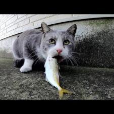 물고기를 잡은 고양이가 많은 고양이에 둘러싸여된다