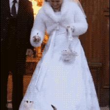 Cat-crashes-wedding