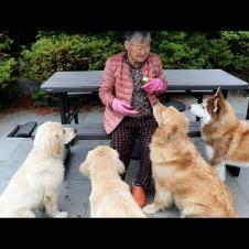 리트리버 강아지에게 할머니가 오이 줬을때 반응