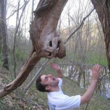 괴물 나무